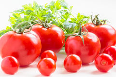 Still life with  tomatoes and parsley. Still life with red tomatoes and green leaves of parsley Royalty Free Stock Photo