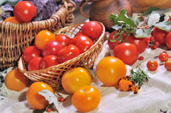 Still life with tomatoes Stock Image