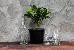 Still Life tree with differently shaped glass bottles Royalty Free Stock Image
