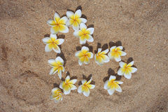 A still life of tropical flowers. Plumeria heart. Royalty Free Stock Photo