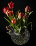Still life with tulips Stock Photos