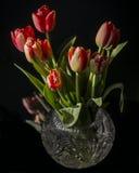 Still life with tulips Stock Photos