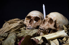Still life of two skulls with dried leaves, white candle and bone royalty free stock photo