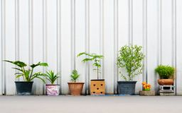 Still life of various plants in the flower pots outdoors with co. Py space royalty free stock image