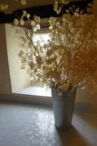 Still life vase with lunaria pods by window Royalty Free Stock Photography