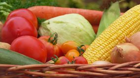 Still life with corn, tomatoes, potatoes and onions in the basket. Still life with vegetables - corn, tomatoes, potatoes and onions in the basket stock video footage