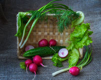 Still life with vegetables. Cucumber,radishes, dill, lettuce, leaf salad royalty free stock photo