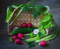 Still life with vegetables. One cucumber,radishes, dill, lettuce, leaf salad stock photos