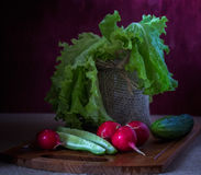 Still life with vegetables. Red radishes ,  tomatoes, salad Stock Image
