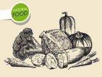 Still life of vegetables Stock Image