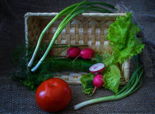 Still life with vegetables. Tomato, cucumber, radishes, dill, lettuce, leaf salad stock photo