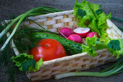Still life with vegetables. Tomato, cucumber, radishes, dill, lettuce, leaf salad stock image