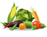 Still life of vegetables vector illustration Royalty Free Stock Photo
