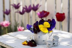 Still life with violets Royalty Free Stock Photo