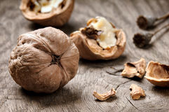 Still-life with walnuts Royalty Free Stock Images