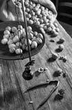Still life with walnuts Royalty Free Stock Photo