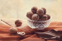 Still life walnuts. Still life in brown tones with walnuts in front of the window Royalty Free Stock Photo