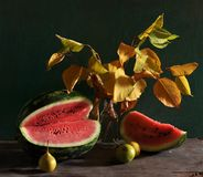 Still life with a water-melon and yellow leaves Royalty Free Stock Image