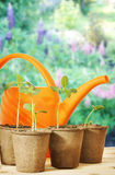 Still life with watering can and seedlings in a garden Royalty Free Stock Image