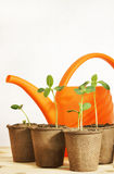 Still life with watering can and seedlings Royalty Free Stock Photography