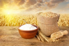 Still life of wheat and flour. Still life ears of wheat and grains in bag and flour in bowl on table with ripe field on the background. Agriculture and harvest Royalty Free Stock Photo