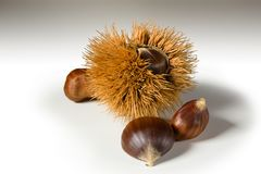 Still life on white background some chestnuts. And a chestnut hedgehog Royalty Free Stock Image