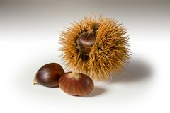 Still life on white background some chestnuts. And a chestnut hedgehog Stock Photos