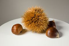Still life on white background some chestnuts. And a chestnut hedgehog Royalty Free Stock Photography