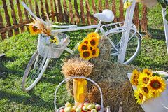 Still life white bicycle and sunflowers stock images