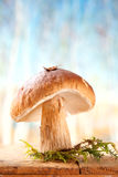 Still life with white boletus mushroom Stock Photo