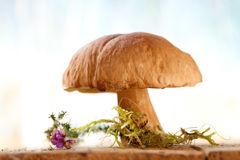 Still life with white boletus mushroom Stock Photography