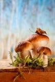 Still life with white boletus mushrooms Stock Photo