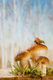 Still life with white boletus mushrooms Stock Photo