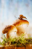 Still life with white boletus mushrooms  macro Royalty Free Stock Images