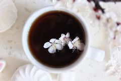 Still life. White cup of black tea with apricot and marshmallow flowers close-up view from above Royalty Free Stock Images