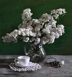 Still life with white flowers Royalty Free Stock Photos