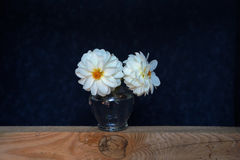Still life with white flowers in a glass vase. Dark blue background Royalty Free Stock Images