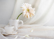 Still life white gerbera cup Stock Photography