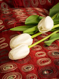 White tulip flowers over red pillow. Still life white tulip flowers the symbols of forgiveness and worth stock images