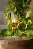 Still life of white wine and grapevine Stock Image