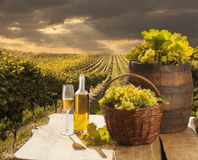 Still life with white wine royalty free stock photo