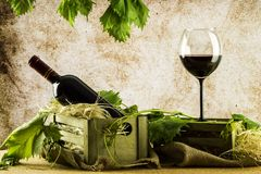 Still life wine Stock Photography