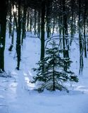 Still life in the winter forest. Illustrations,snow landscape royalty free stock photo