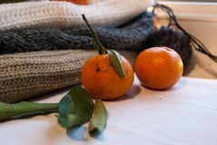 Still life winter Royalty Free Stock Images