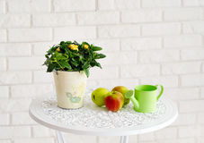 Still Life With Apples And Garden Watering Pot Stock Photography