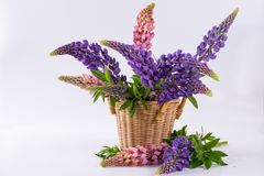 Still Life With Bouquet Of Summer Flowers In Basket. Royalty Free Stock Photography