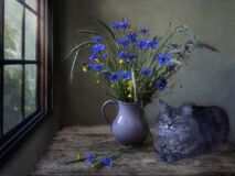 Free Still Life With Field Flowers And Pretty Kitty Royalty Free Stock Image - 214060206