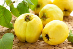 Free Still Life With Quinces Stock Image - 16722241
