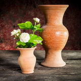 Still life withe jasmine flower Stock Image