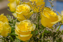 Still Life of Yellow Roses Stock Image